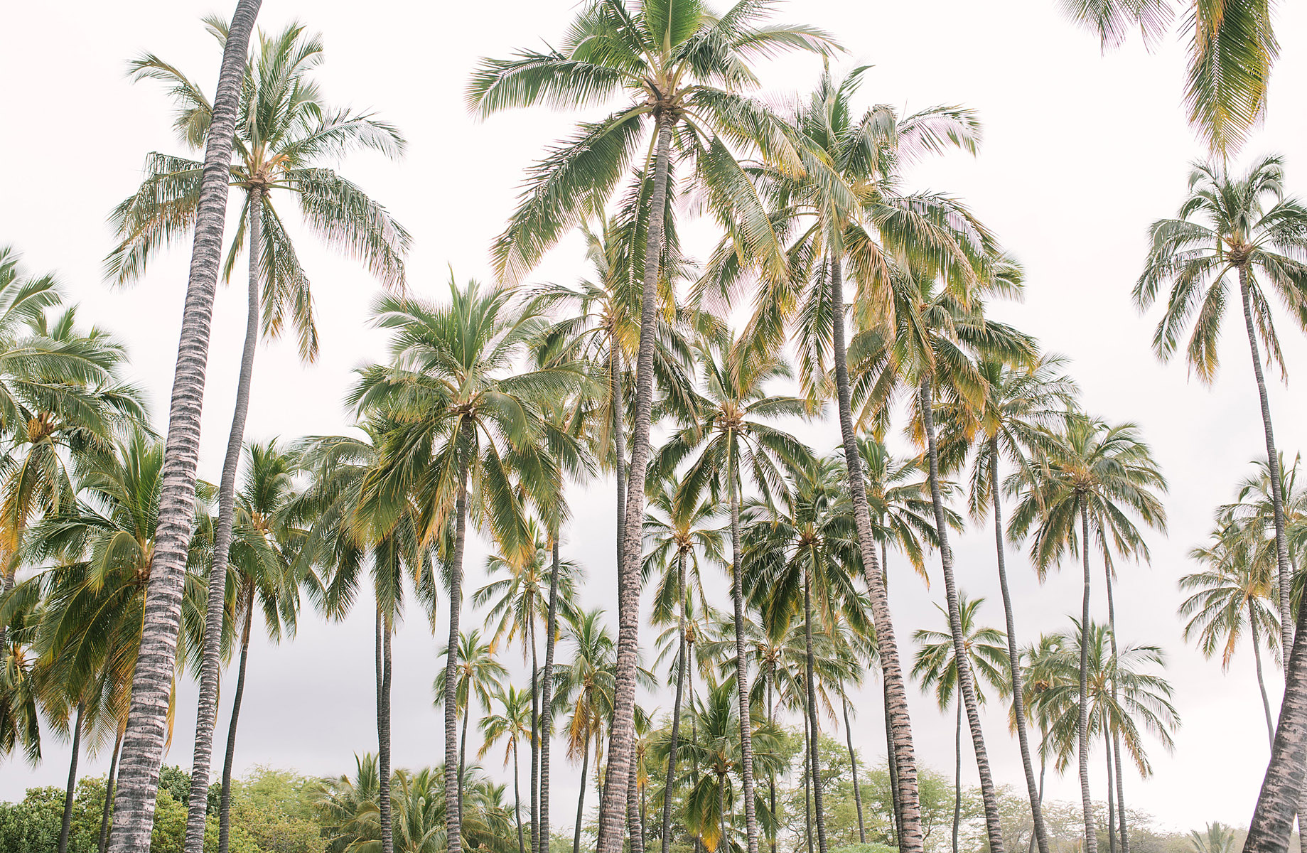 001_Elena_Hawaii_Palms