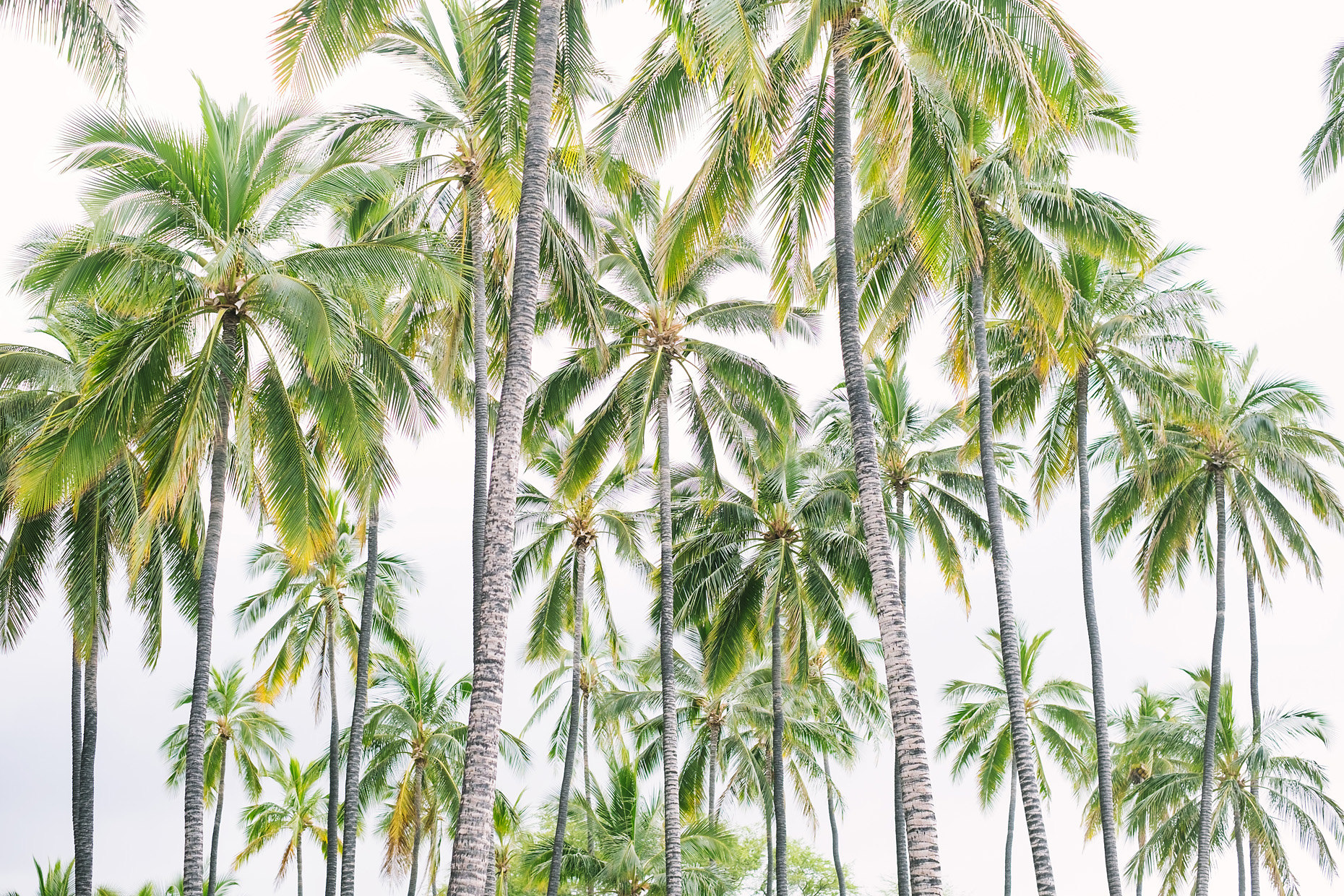 Hawaii_PalmTrees_EG_1282