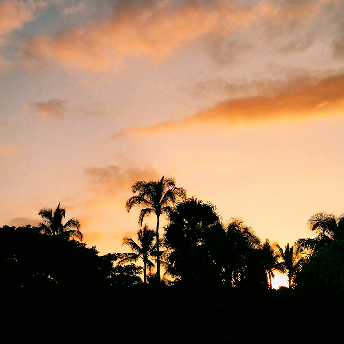 Tropical_Hawaii_Palms_Sunset